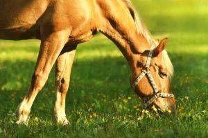 Hvordan å kaste en hest tema Birthday Party