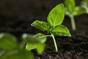Hva skjer med karbondioksid under Fotosyntese?