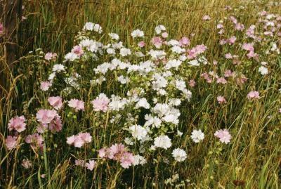 Hva er tre interessante fakta om Prairie Biom?