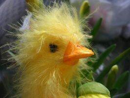 Hvordan Color Chicks for påsken