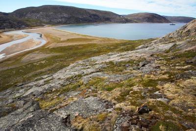 Hvilken type insekter som lever i Tundra?