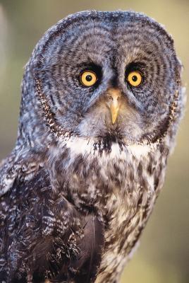 Hva slags organismer Owls spise?