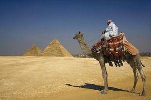 Hvor fort en Camel Run?