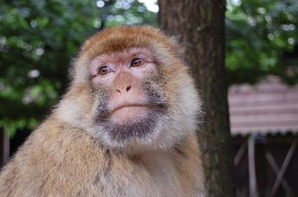 Dyr som lever i den brasilianske regnskogen