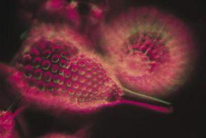 Hvordan lage en Mini mikroskop