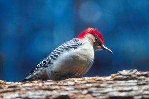 Woody Woodpecker Games