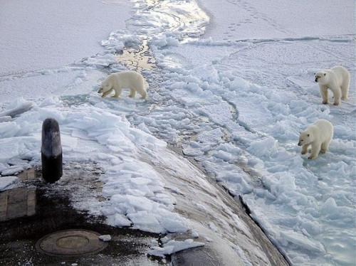 Livet i Nordpolen