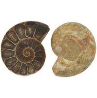 Hvordan lage en Seashell Fossil Ut av modelleire
