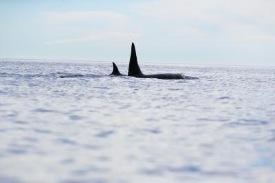 Typer av dyr funnet i havet