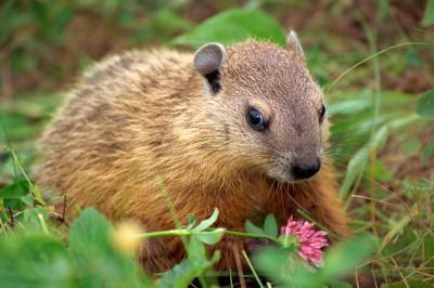 Groundhog Day Familieaktiviteter