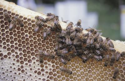 Hvordan bygge en Mason Bee Hus