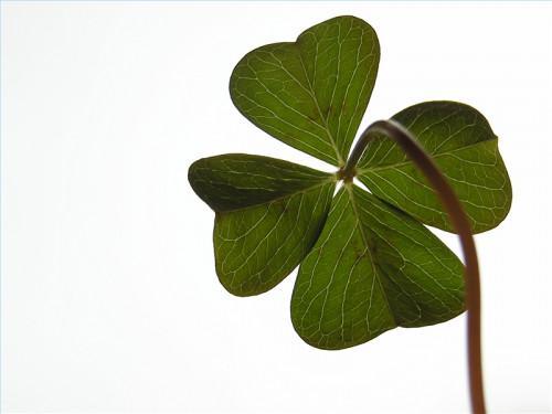 St. Patricks Day Lesson Plan og Aktiviteter