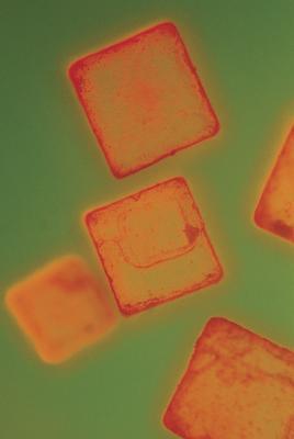 Science Fair Projects for Økende Epsom salt krystaller