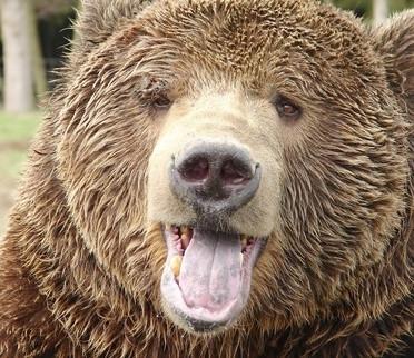 Hvordan identifisere Skjeletter av Bears