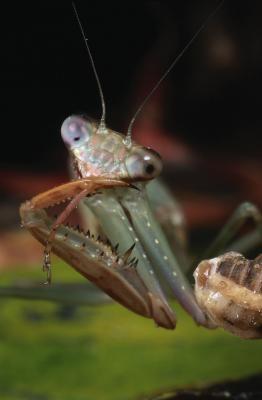 Miljøeffekter på Insect Development