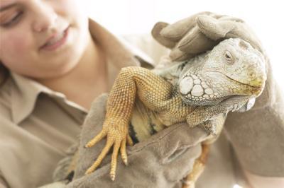 Fordelene ved å studere dyr i fangenskap