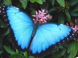 Hvordan finne kuponger for Butterfly House i St. Louis