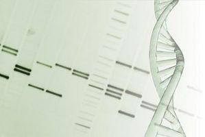 Den Fordeler og ulemper av Gel elektroforese for DNA fingerprinting