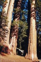 Spesielle egenskaper av temperert regnskog