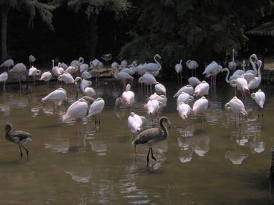 Naturlig Habitat for Flamingos