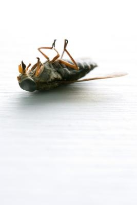 Hvordan Kill Green Flies