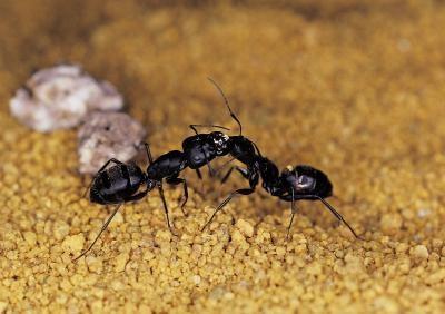 Slik behandler du en Ant Farm