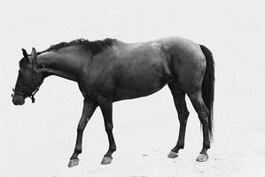 Hvordan bygge en hest SIM spill
