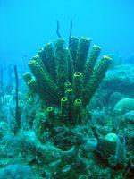 Virkningene av klimaendringer på akvatiske økosystemer
