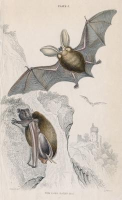 Hvordan en Bat Bruk en Echo?