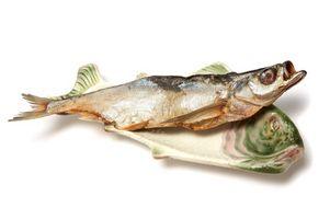 DIY Big Fish Taksidermi