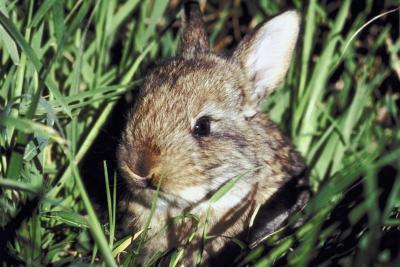 Den beste måten å sette opp en kanin Habitat