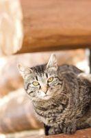 Hvordan tilbakeviser katter fra en veranda