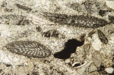 Hvilke typer bergarter med fossiler?