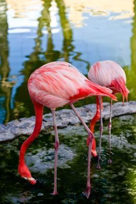 Bird Beak Tilpasning og aktivitet