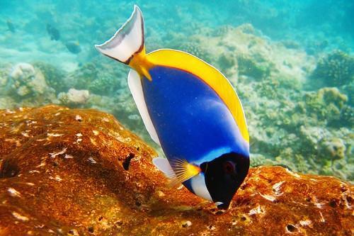 Hvorfor saltvannsfisk Har Worms?