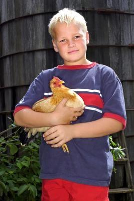 Hvordan velge den beste kyllinger for egglegging
