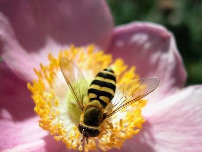 Forskjellige typer Entomology