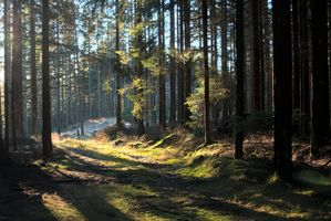 Løvskog Biom Soil & dens virkning på planter og dyr