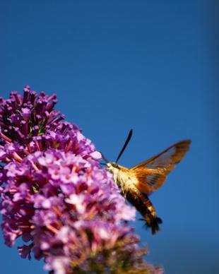Hvordan identifisere flygende insekter i Arizona