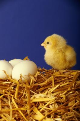 Hva er en eggleggende dyr?