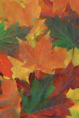 Hva Pigmenter i planter bidrar til Fotosyntese?