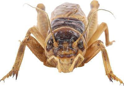 hvor mange bein har edderkoppen