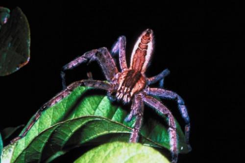Edderkopper i Fayetteville, Georgia