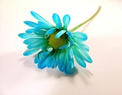 Hvordan Blomster farge Blomster?