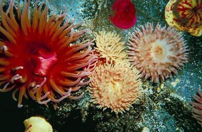 Interessante emner i Invertebrate Zoology