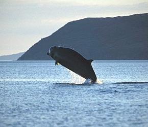 Hva er en gruppe av Whales heter?