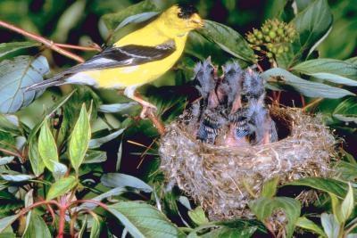 Hvordan Raise Forlatte Wild Birds
