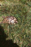 Ulike arter av Tortoises