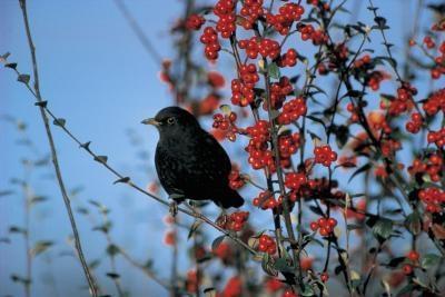 Hva er årsakene til plutselig Die-Off av Wild Birds?