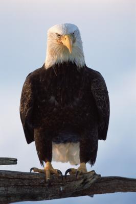 Årsaker til utryddelse av truede og utdødde arter